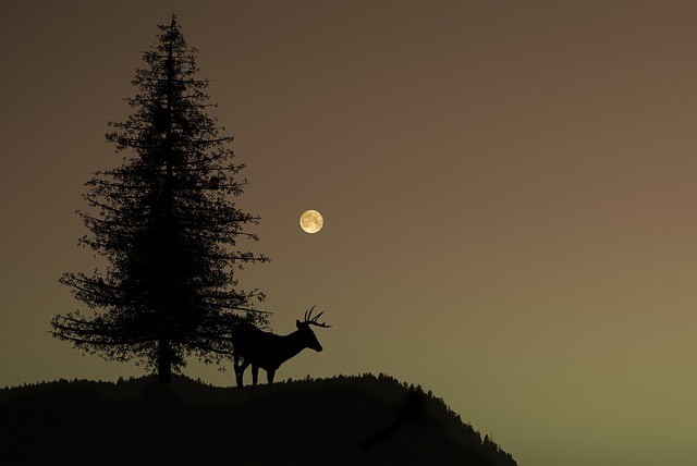 Moon Stag Tree Hilltop